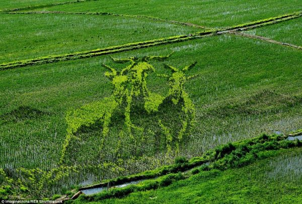 2A14406500000578-3147356-Three_Billy_Goats_Gruff_A_trio_of_vibrant_green_goats_emerge_fro-a-50_1435856171523