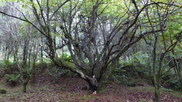 _96063297_antoniovicentefirsttreeplantedgibbyzobel