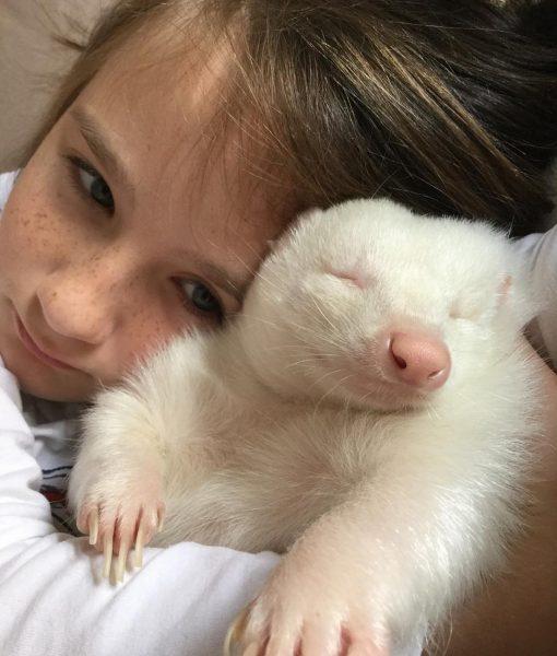 albino_kokarca (5)