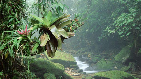 brazil-forest-desktop-background