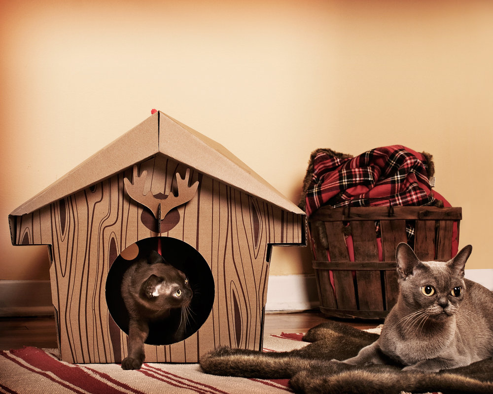 Кошкин дом смешные картинки, картинки словами