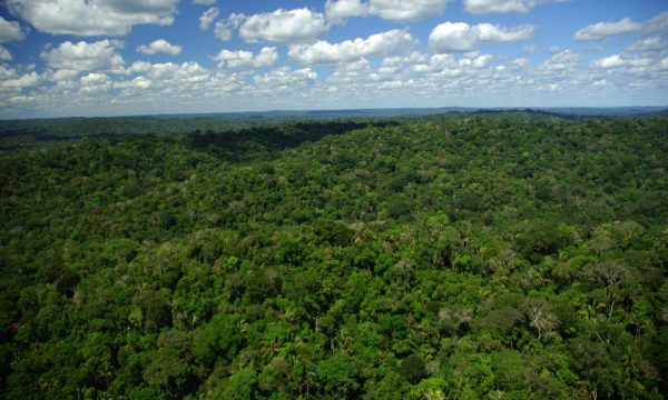 forest-overview-HI_115486