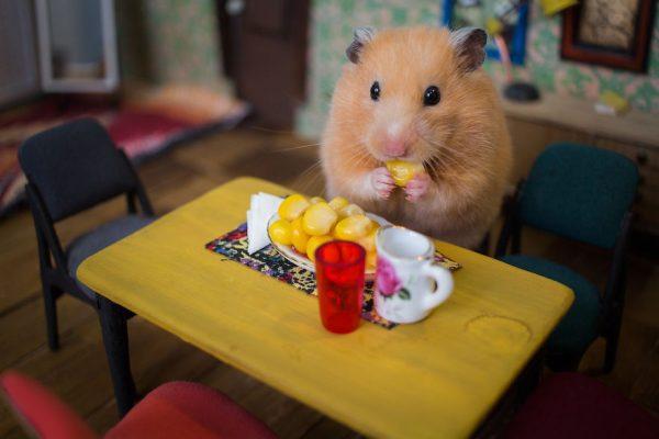 hamster_sehri_11