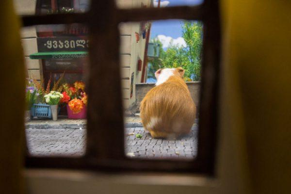 hamster_sehri_15