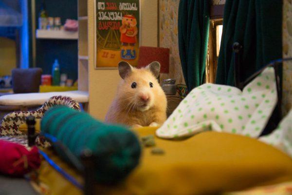 hamster_sehri_2