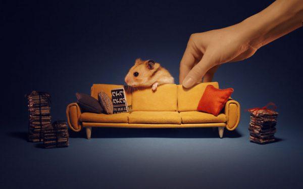 hamster_sehri_24
