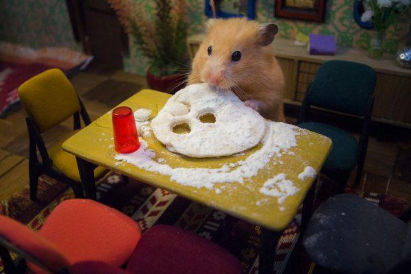 hamster_sehri_7