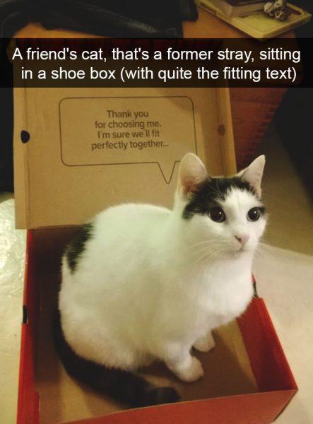 hilarious-cat-snapchats-101-594913112e159__700