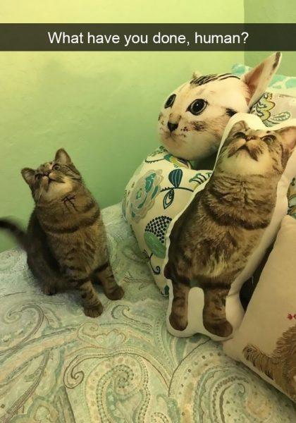 hilarious-cat-snapchats-14-5948f05090e7e__700