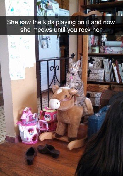hilarious-cat-snapchats-15-5948f053966dd__700