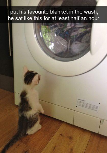 hilarious-cat-snapchats-18-5948f05a9028e__700