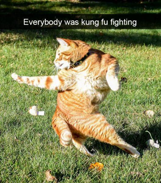 hilarious-cat-snapchats-206-594a221c77049__700