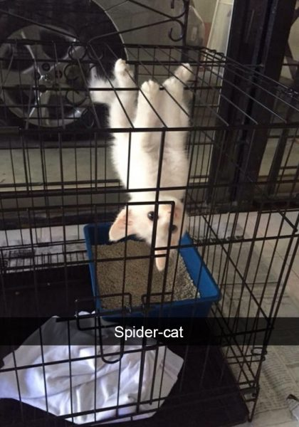 hilarious-cat-snapchats-210-594a2ce701af5__700
