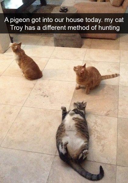 hilarious-cat-snapchats-211-594a30bbc2850__700