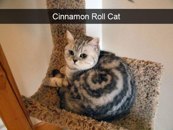 hilarious-cat-snapchats-29-5949205f2fc7d__700