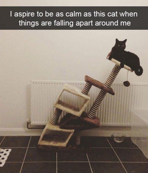 hilarious-cat-snapchats-3-5948f03775d51__700