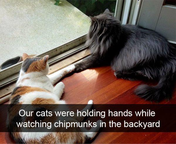 hilarious-cat-snapchats-38-59493521892e3__700