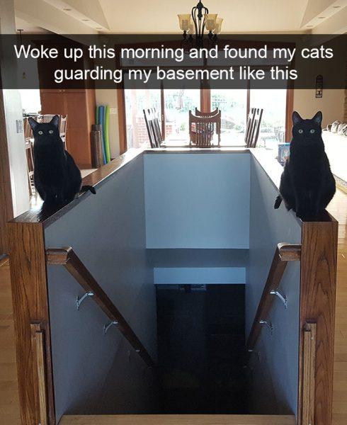 hilarious-cat-snapchats-47-594a109d1a1dd__700