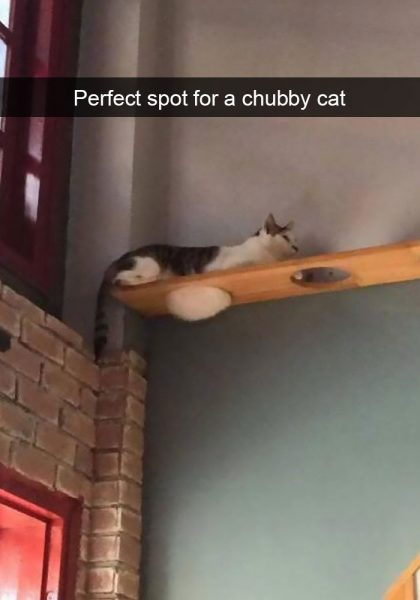 hilarious-cat-snapchats-59-594a245fae217__700