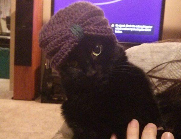 kedi_seslenisleri (16)