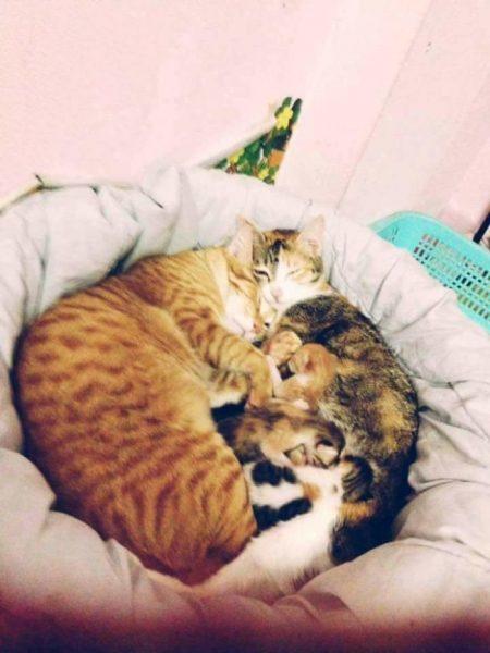 yello_cat_tam (2)