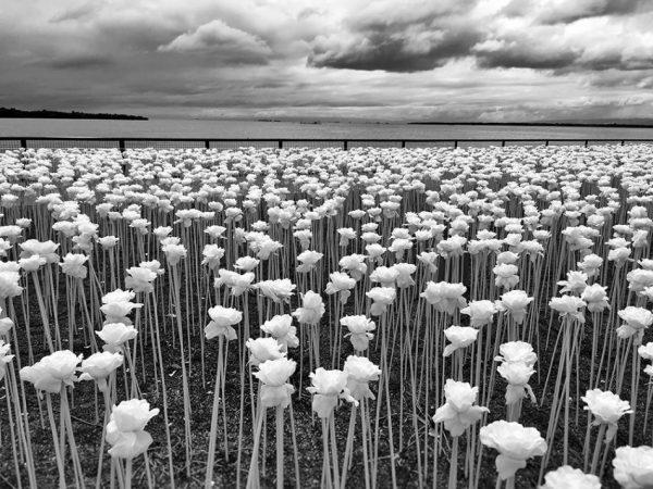 1stPlace-Floral_Sidney-Po-950x713