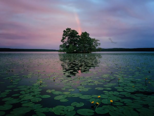 1stPlace-Nature-AaronSandberg-950x713