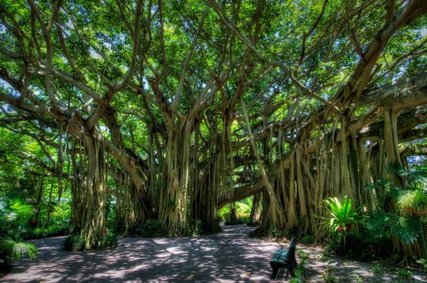 2-Huge-Banyan-tree