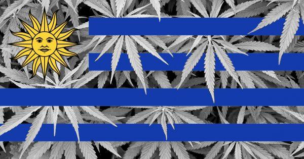 5-LEGAL-Cannabis-in-apotheek-Uruguay