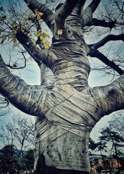 53191_21733-17496_1_1_9_kaiyuan-Teng-Trees-2-678x950
