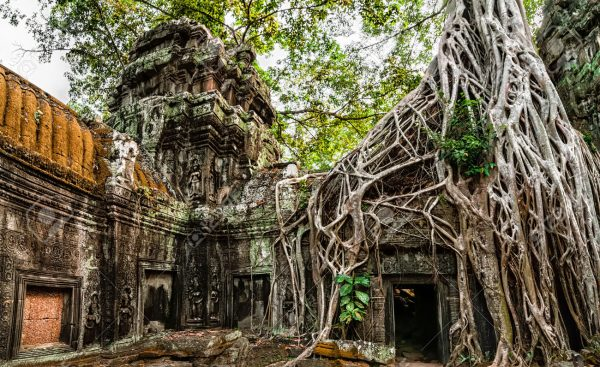 Ancient Khmer architecture. Ta Prohm temple with giant banyan tr