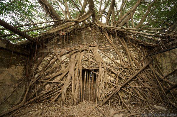 9-Taiwan-tainan-anping-tree-house