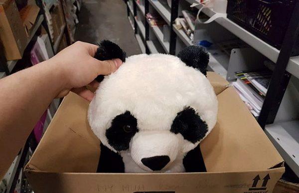 boy-write-note-buy-stuffed-panda-leon-ashworth-2
