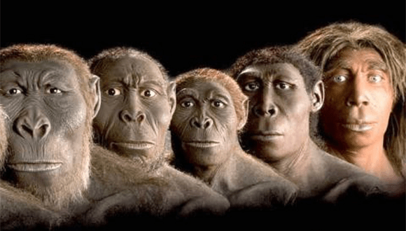 evrim-mufredatta-yok