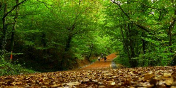 belgrad-ormanı