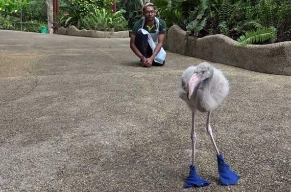 flamingo_squish (2)