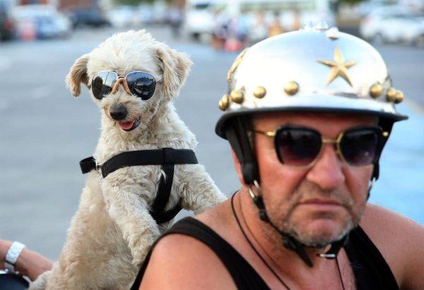 kafe_motosiklet_kopek (3)