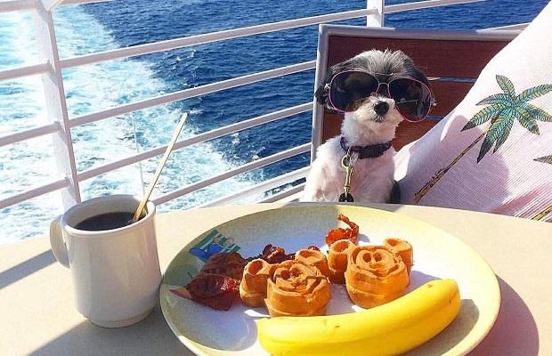 Seyahat Fotoğraflarıyla Hepimizi Kıskandıracak 17 Instagram Ünlüsü Gezgin Köpek   ListeList.com