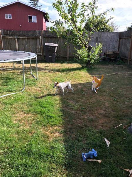 ginger_dog_baloon (5)