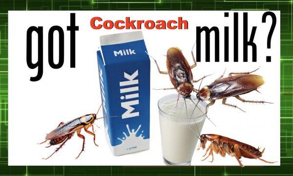 milk-636102698799006601