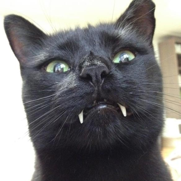 vampir_kedi (8)
