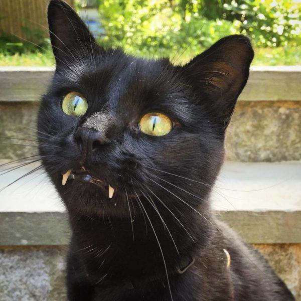 vampir_kedi (9)