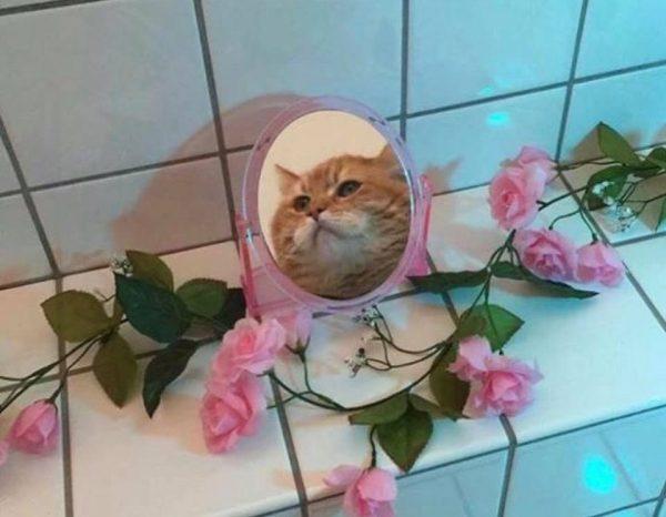 basak_kedi