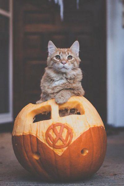 halloween cat (1)