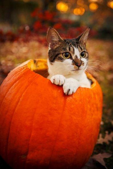 halloween cat (10)