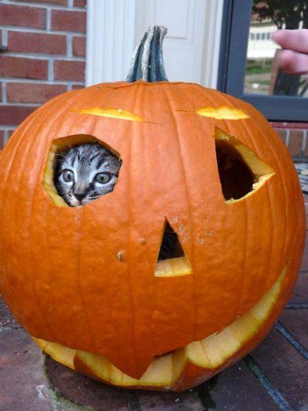 halloween cat (11)