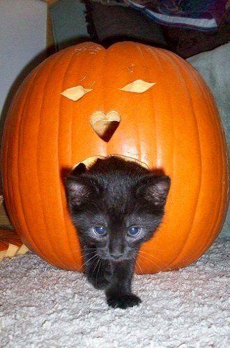 halloween cat (12)