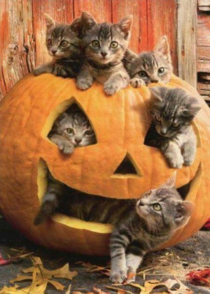 halloween cat (2)