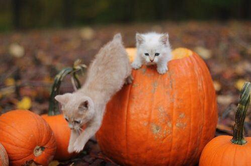 halloween cat (4)