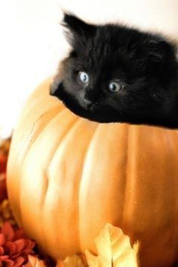 halloween cat (5)